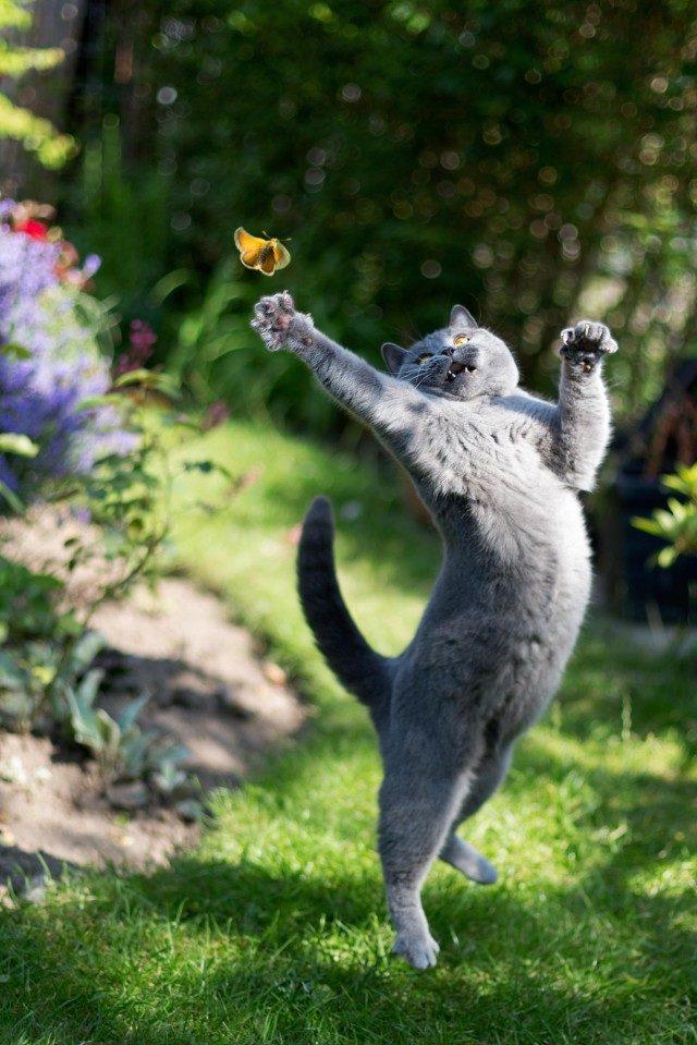 10 признаков кошачьей любви Original