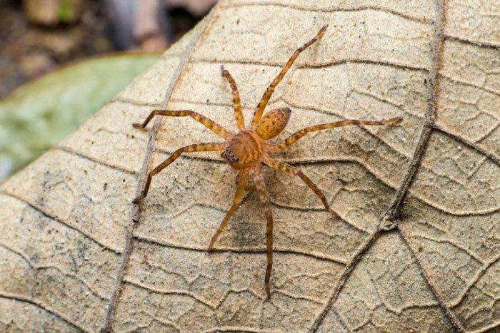 Пять самых опасных пауков на планете. Избегайте их всеми силами!