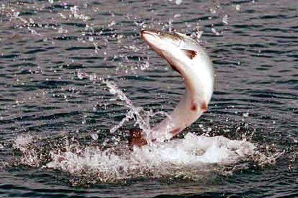 Рыбаки Аляски пригрозили бойкотом российской рыбе
