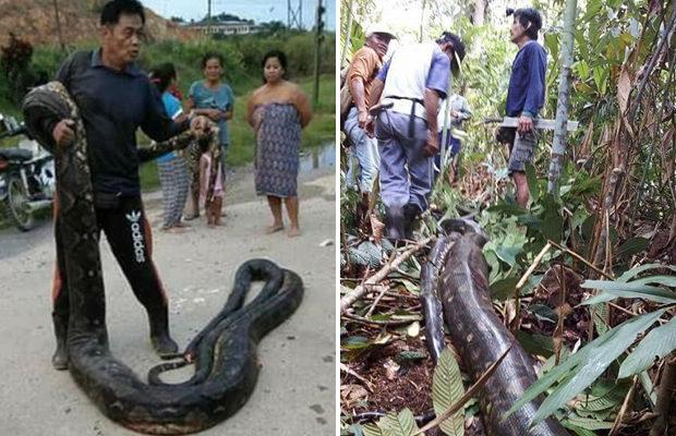 Жители Борнео убили и съели …