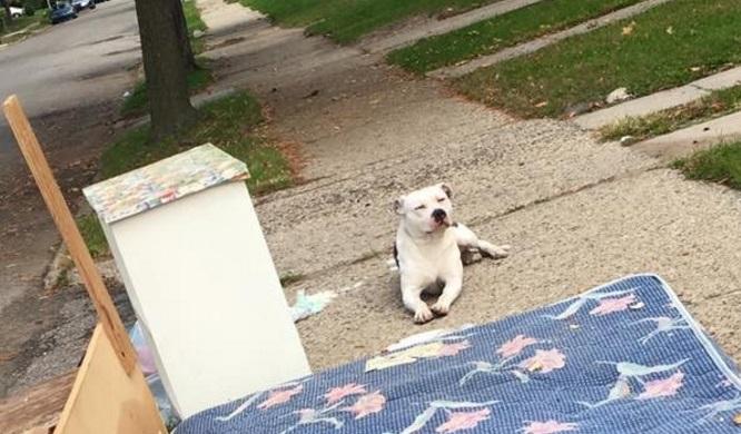 Семья бросила эту собаку вместе со старым хламом.