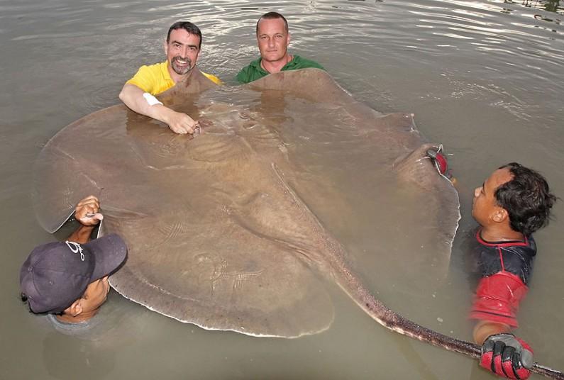 гиганты из мира природы 11 На снимках: гиганты из мира природы   самые крупные животные в мире!