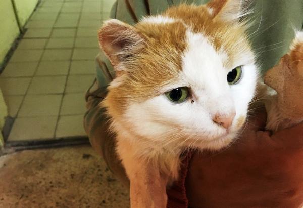 В Воронеже спасли бездомного кота, в которого стреляли из пневматики