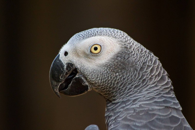 talkinganimals08 10 удивительных животных, которые умеют говорить