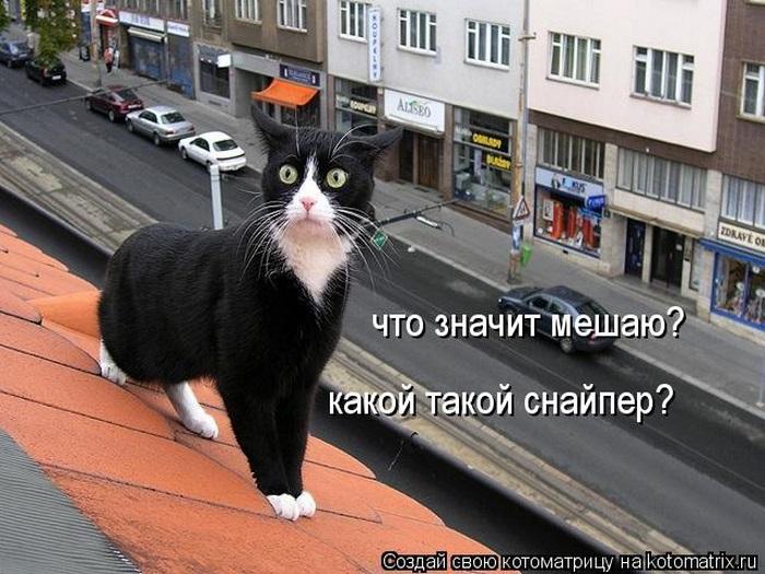 """КОТОМАТРИЦА"""