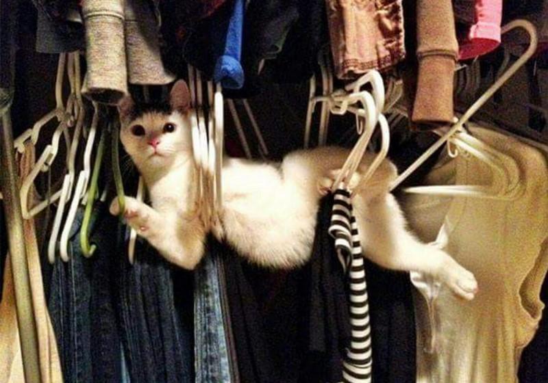18 забавных снимков животных, попавших в крайне неловкое положение