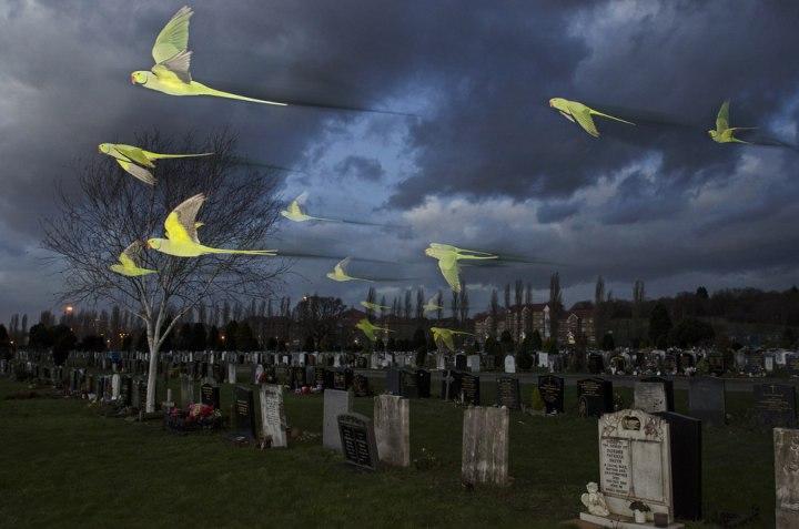 «Дикие духи», Сэм Хобсон Лучшие фотографии дикой природы 2014 года