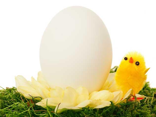 Ученые объяснили парадокс яичной скорлупы