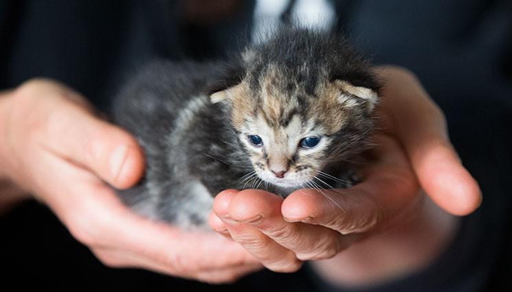 Котенок, спасенный из дымохода, подружился со всеми животными на ферме