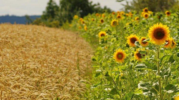 Путин: Для увеличения экспорта сельскохозяйственной продукции нужны системные меры