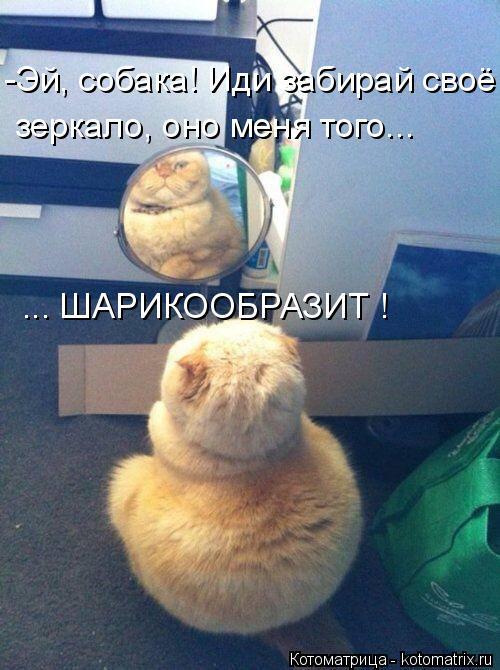 Котоматрица: -Эй, собака! Иди забирай своё зеркало, оно меня того... ... ШАРИКООБРАЗИТ !