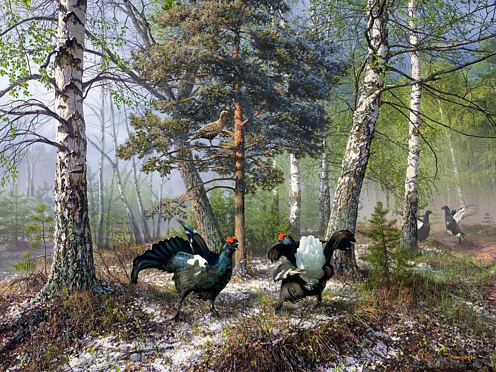 Есть в России места, Где природа чиста...