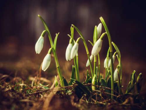 Приметы весны: ранняя или поздняя весна в этом году