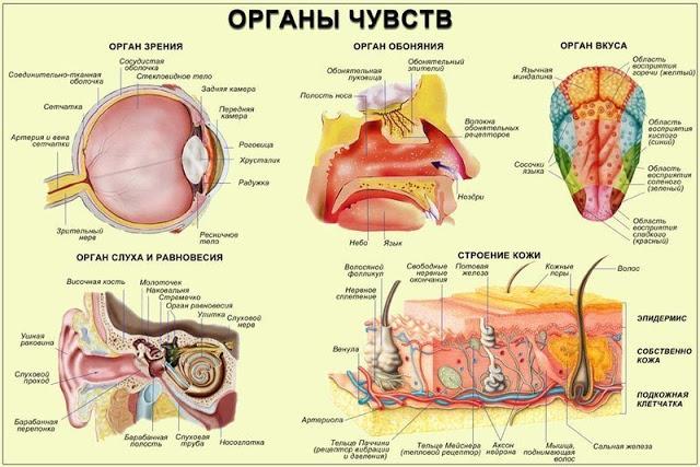 6 упражнений восточной медицины для органов чувств