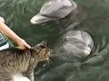 Необычная дружба кота и дельфина