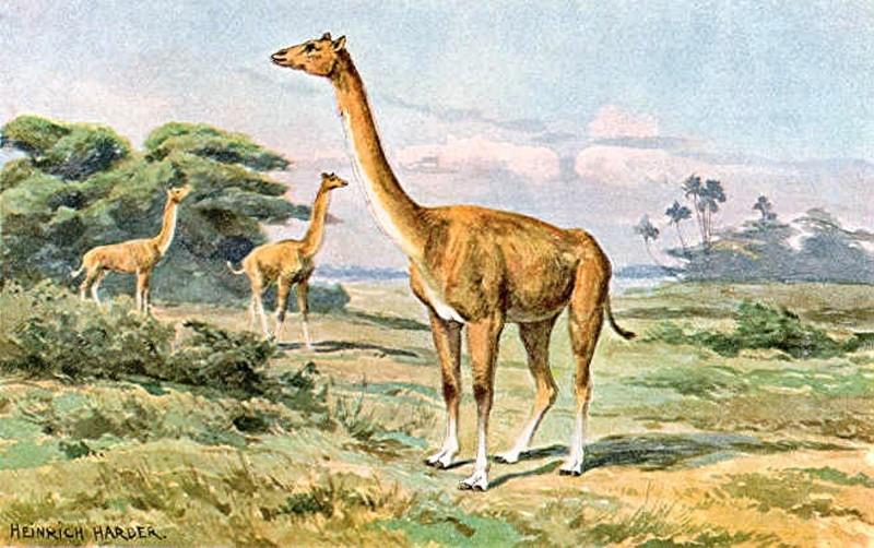 Альтикамелус — «гибрид вербл…