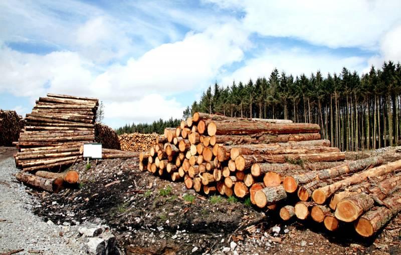 Почему нелепо обвинять китайцев в вырубке сибирского леса