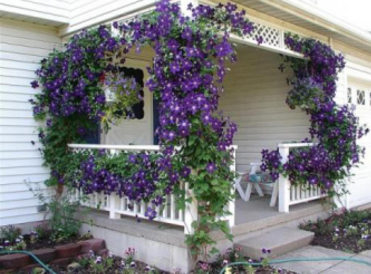 Многолетние лианы для сада: основные виды и уход