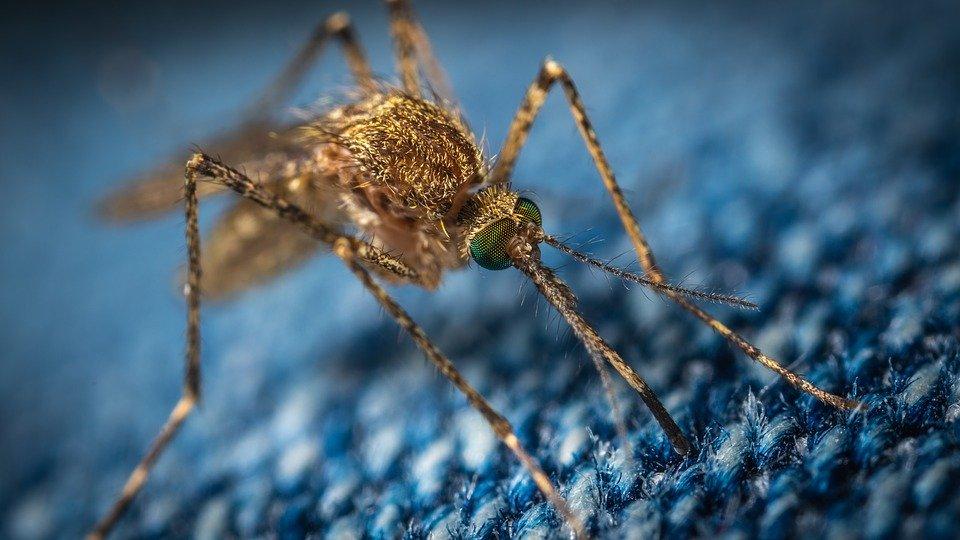 Почему комары кусают некоторых людей больше, чем остальных?