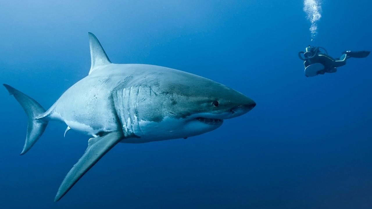 1. Акулы — машины для убийства на пике эволюционного развития. мифы, разрушители легенд, факты