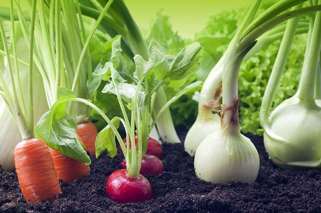 Что посадить в апреле в открытый грунт и на рассаду