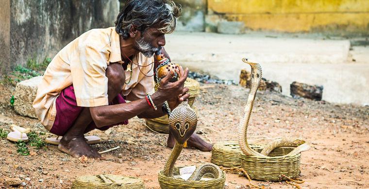 Как удается заставить змею танцевать?