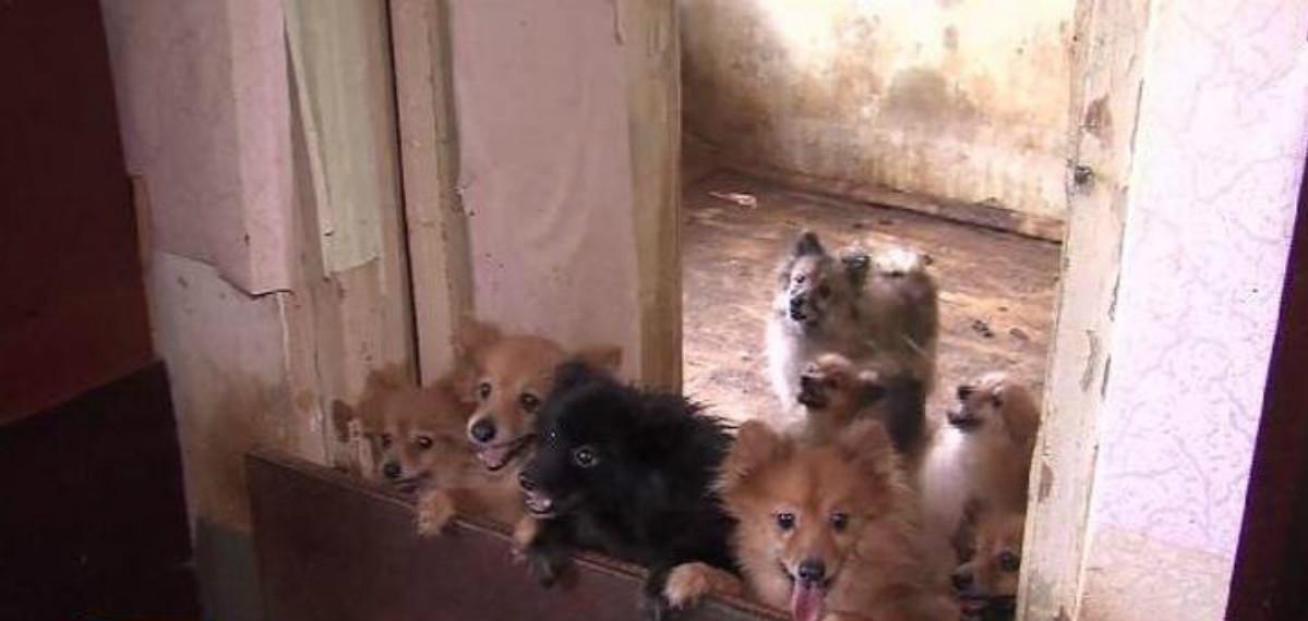 50 собак в плену! Квартира н…