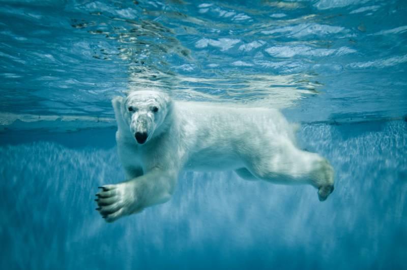 Глава Минприроды рассказал о реакции в ООН на заявку РФ по арктическому шельфу