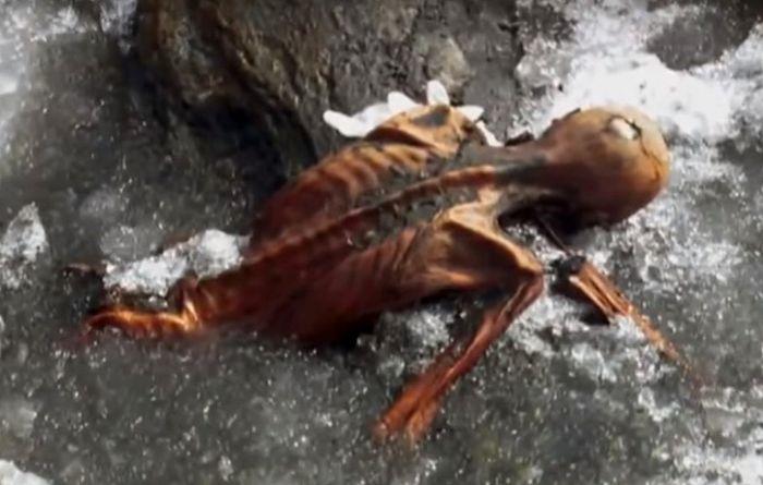 За что мумия мстит своим открывателям?
