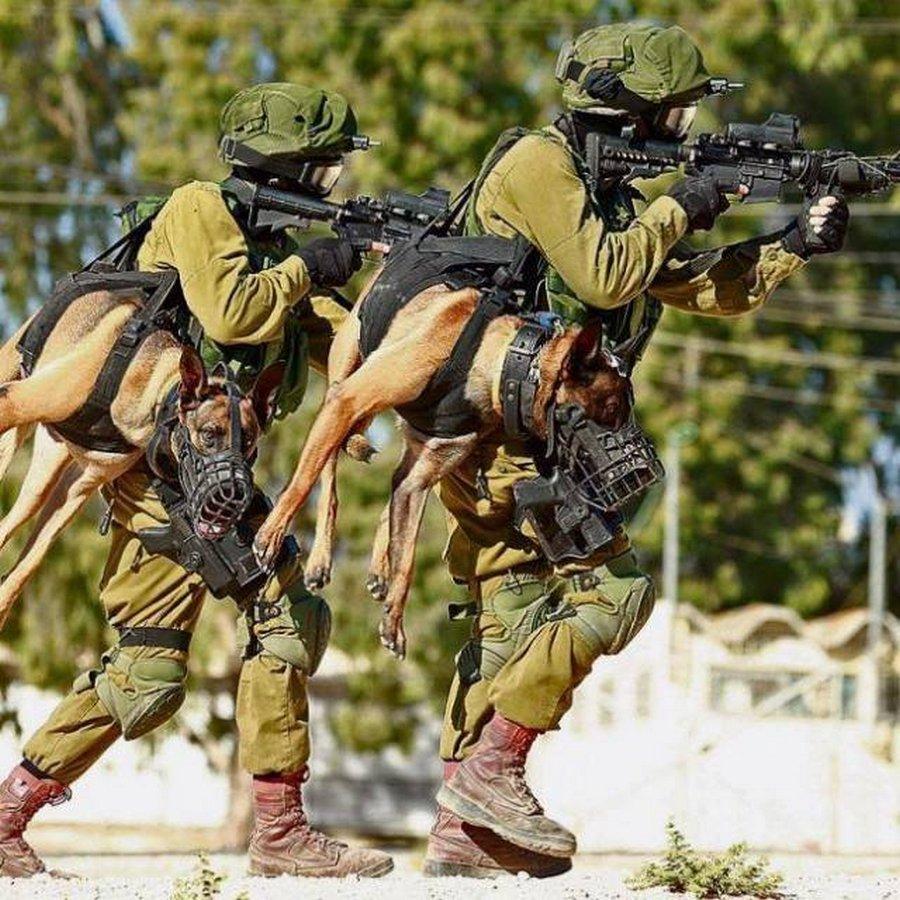 Боевые псы подразделения «Окец»
