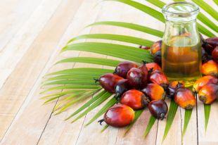 Реальный или выдуманный вред у пальмового масла?