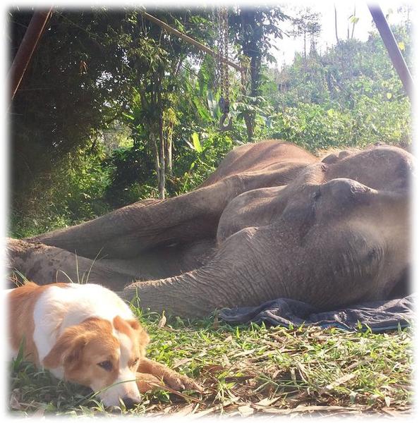 """""""Он спокойно лежал рядом со слоном, до заката - до последнего вздоха."""""""
