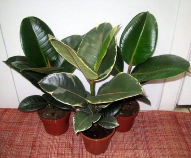 Хотя бы одно из этих растений должно быть у каждого дома! Ведь они — кислородные бомбы