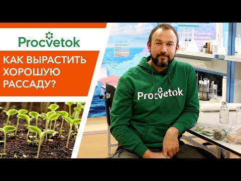 Как избежать проблем при выращивании рассады?