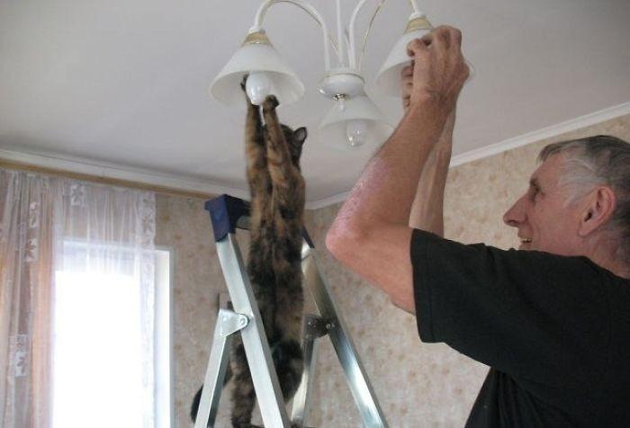 Хозяин, давай я тебе помогу кошки, приколы, прикольные фото животных, смешные кошки