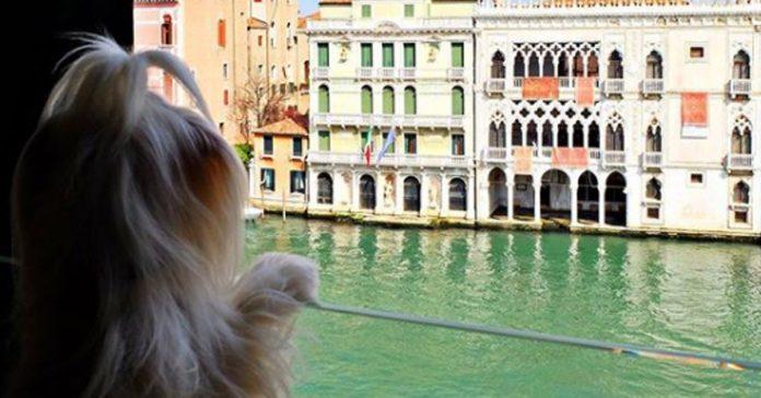 Ради такого вида на Венецию,…
