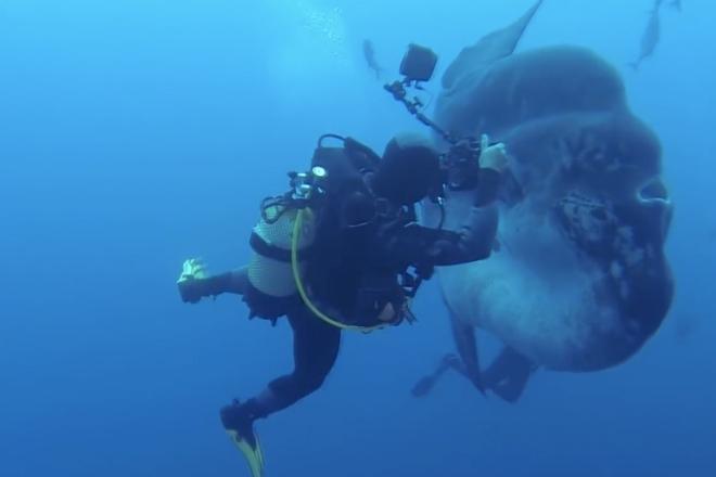 10 невероятно страшных моментов, снятых на камеру дайверами