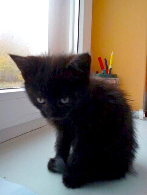 «Боролись долго, но не зря!» Врачи советовали усыпить котёнка, но девушка никому не отдала свою милую Элю!