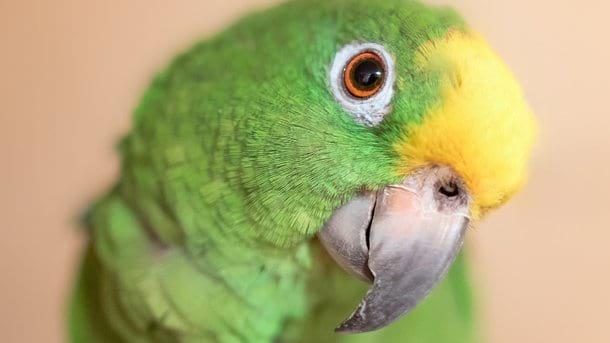 Попугай-сказочник взорвал Сеть. Такую сказку про Красную Шапочку Вы еще не слышали!