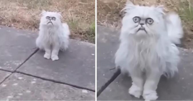 Самый страшный котик в мире напугал пользователей сети
