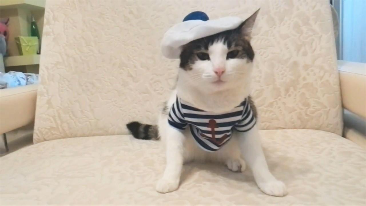 Русские приколы с котами за …