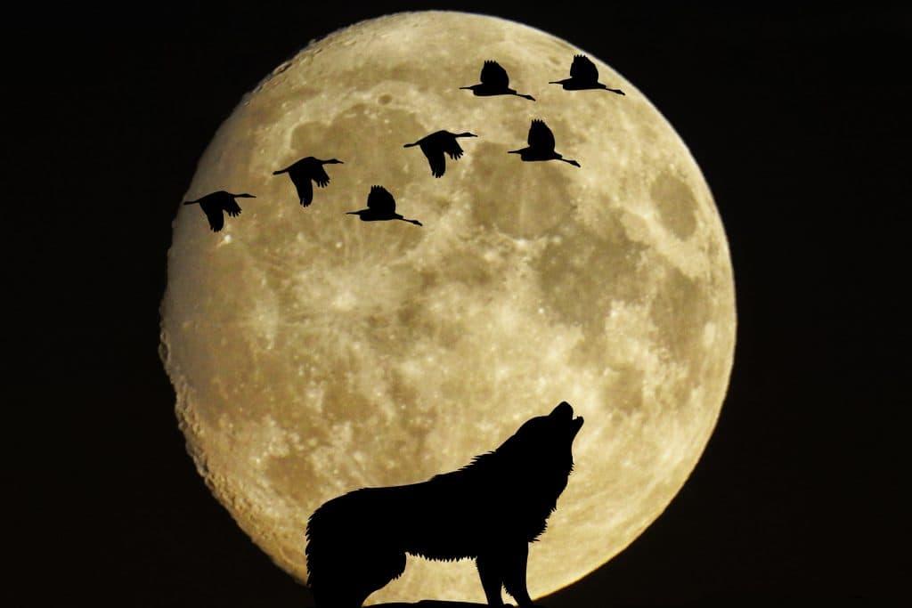 Фаза луны 17 января 2019 года