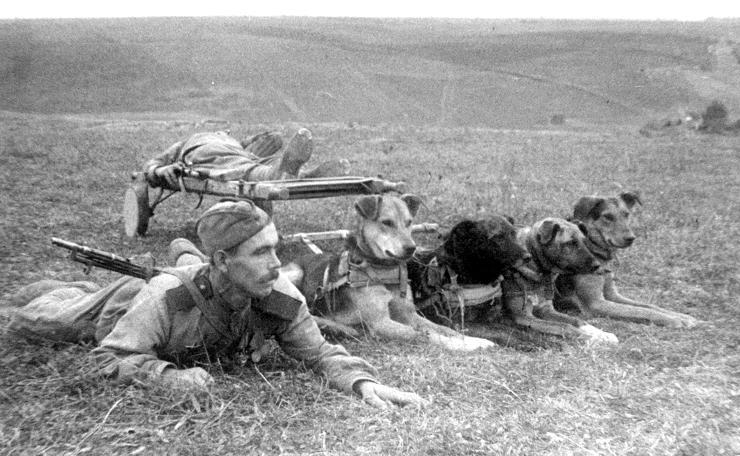 Как во время войны 150 собак вступили в рукопашную с немецким полком пехоты