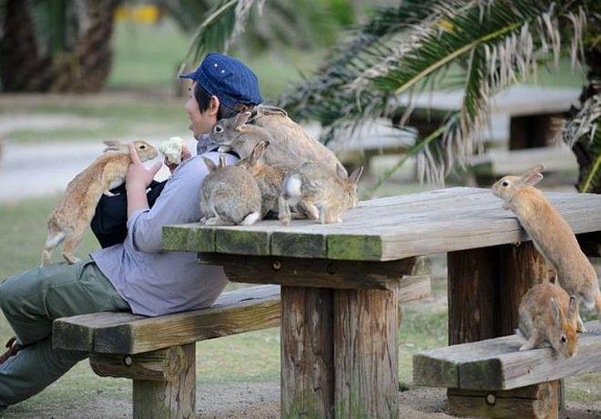 Удивительная Япония: Нам все это кажется странным