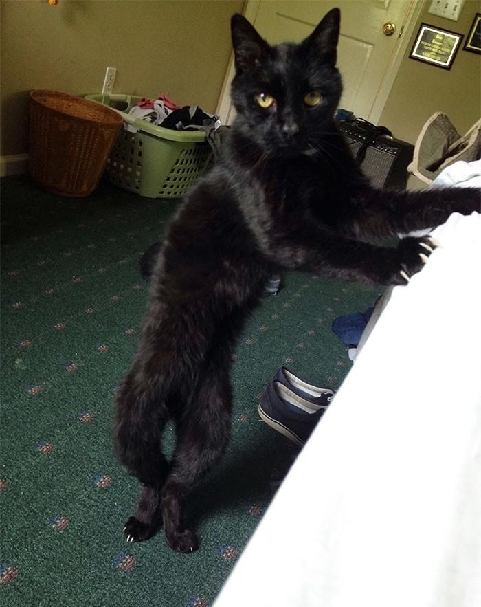 Этот кот очень странный кошки, приколы, прикольные фото животных, смешные кошки