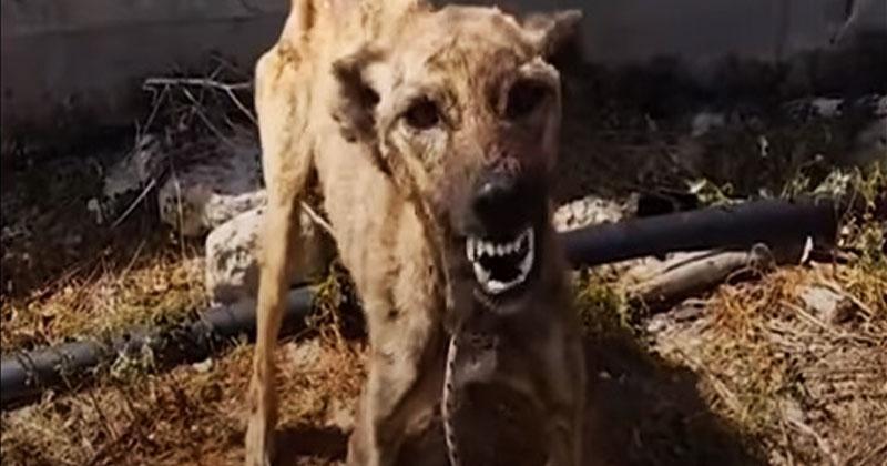 Эта собака постоянно лаяла и никого не подпускала к себе. Посмотрите, как изменилось ее поведение, когда ее забрали в приют!