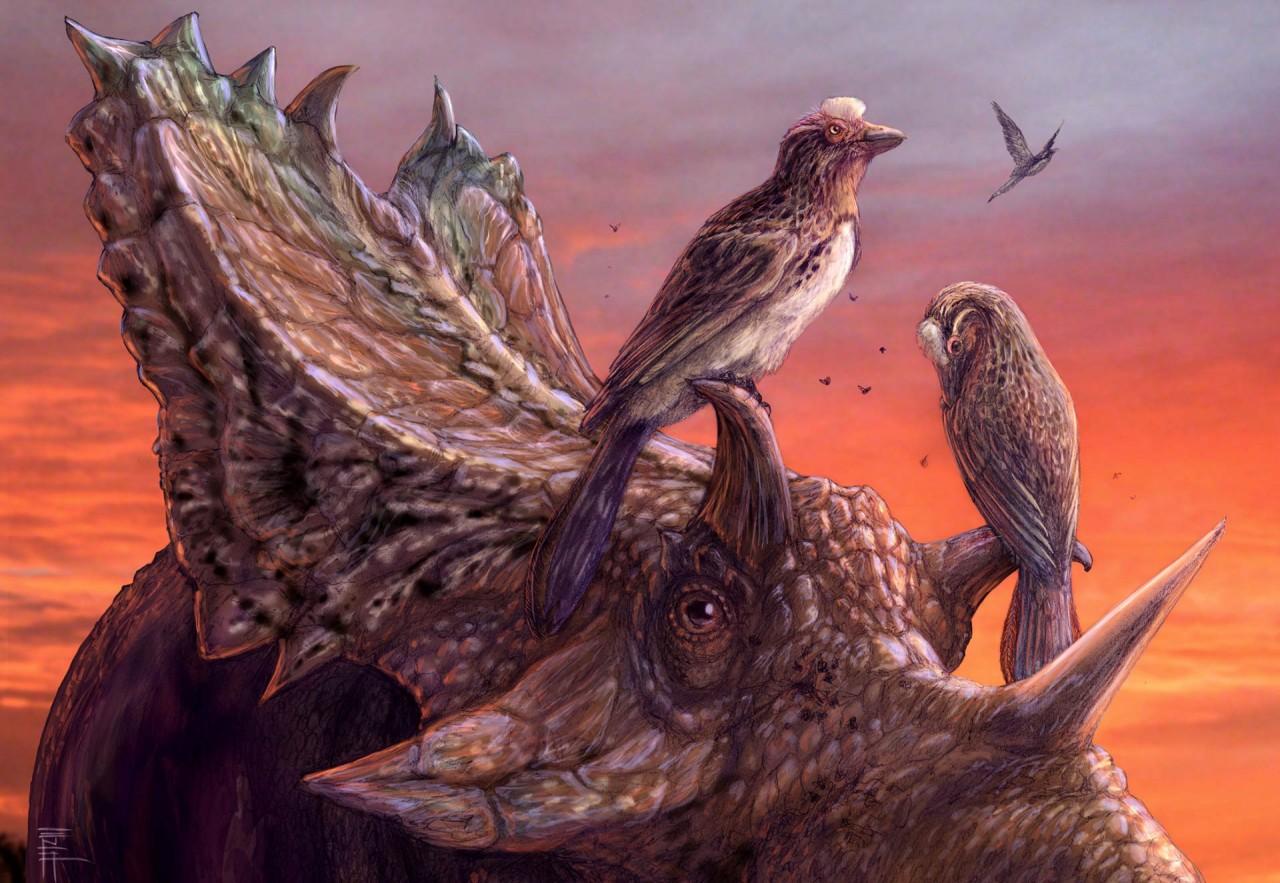 Вымершие энанциорнисы могли летать не хуже современных птиц