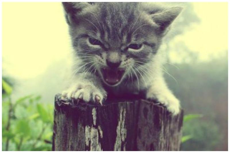 Очень сильно злиться коты, милота, поведение, счастье, эмоции