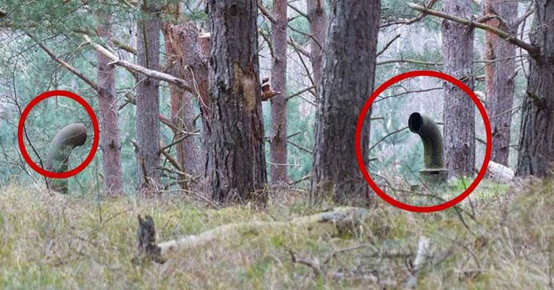 Парни ходили по лесу и наткнулись на трубы. Они остолбенели, когда узнали, что находится под землей!