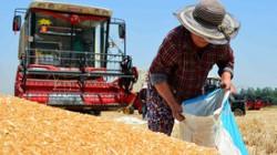Экспорт продовольствия из России вырос на 21%